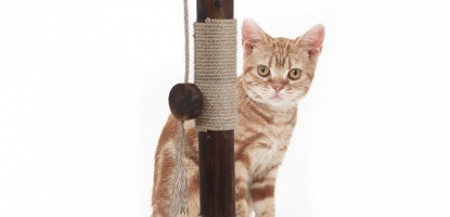 Why your cat need a cat scratching post